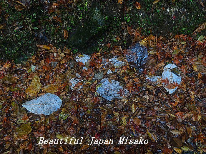 秋から冬へ 宴の後・・・・゚☆、・:`☆・・゚・゚☆。_c0067206_10533863.jpg