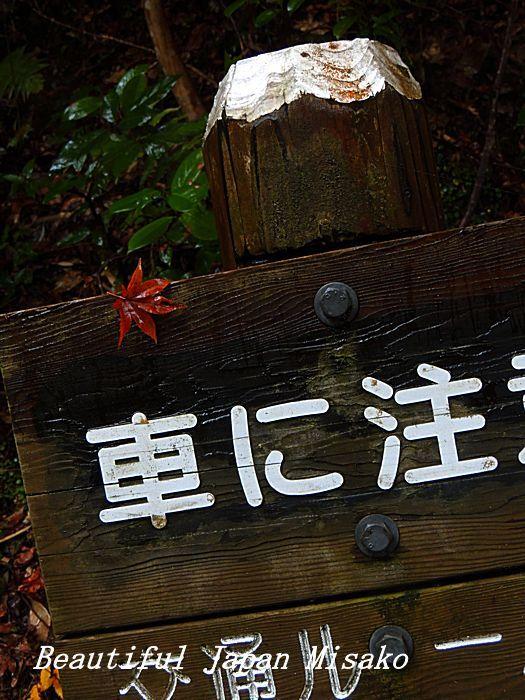 秋から冬へ 宴の後・・・・゚☆、・:`☆・・゚・゚☆。_c0067206_10534058.jpg