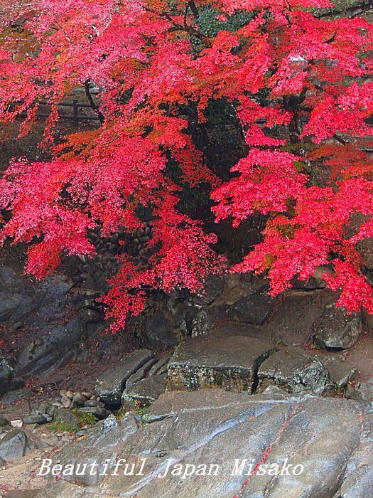 秋から冬へ 宴の後・・・・゚☆、・:`☆・・゚・゚☆。_c0067206_10534480.jpg