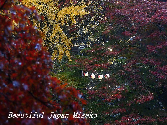 秋から冬へ 宴の後・・・・゚☆、・:`☆・・゚・゚☆。_c0067206_10534547.jpg