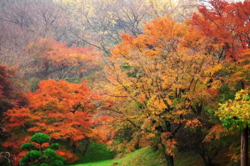 大田原市 御殿山公園の紅葉1_a0263109_19123597.jpg