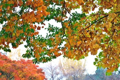 大田原市 御殿山公園の紅葉1_a0263109_19123600.jpg
