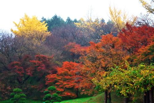 大田原市 御殿山公園の紅葉1_a0263109_19123629.jpg