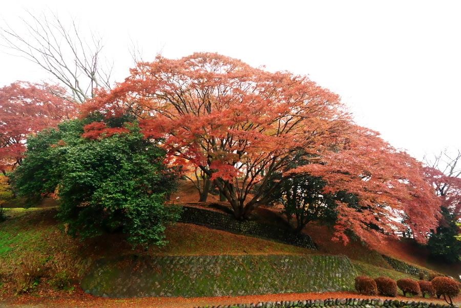 大田原市 御殿山公園の紅葉1_a0263109_19123730.jpg