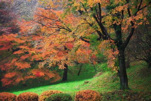 大田原市 御殿山公園の紅葉1_a0263109_19123777.jpg