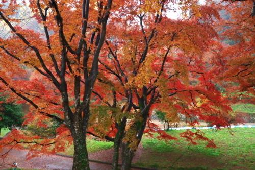 大田原市 御殿山公園の紅葉1_a0263109_19125755.jpg