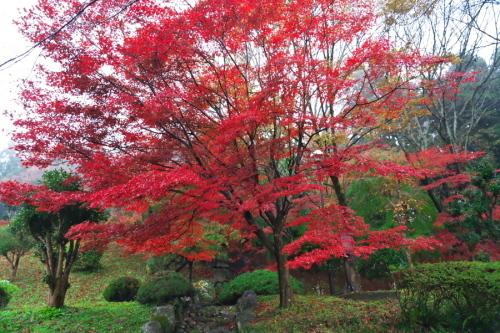 大田原市 御殿山公園の紅葉1_a0263109_19125830.jpg