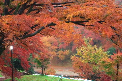大田原市 御殿山公園の紅葉1_a0263109_19125925.jpg