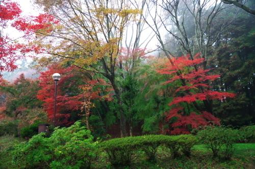 大田原市 御殿山公園の紅葉1_a0263109_19125939.jpg