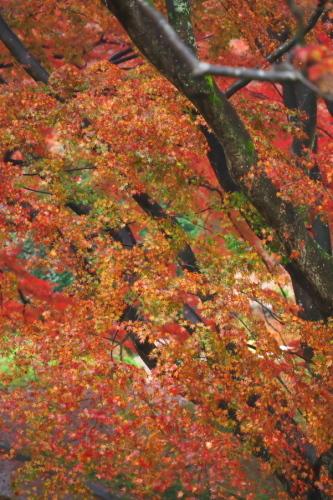 大田原市 御殿山公園の紅葉1_a0263109_19125980.jpg