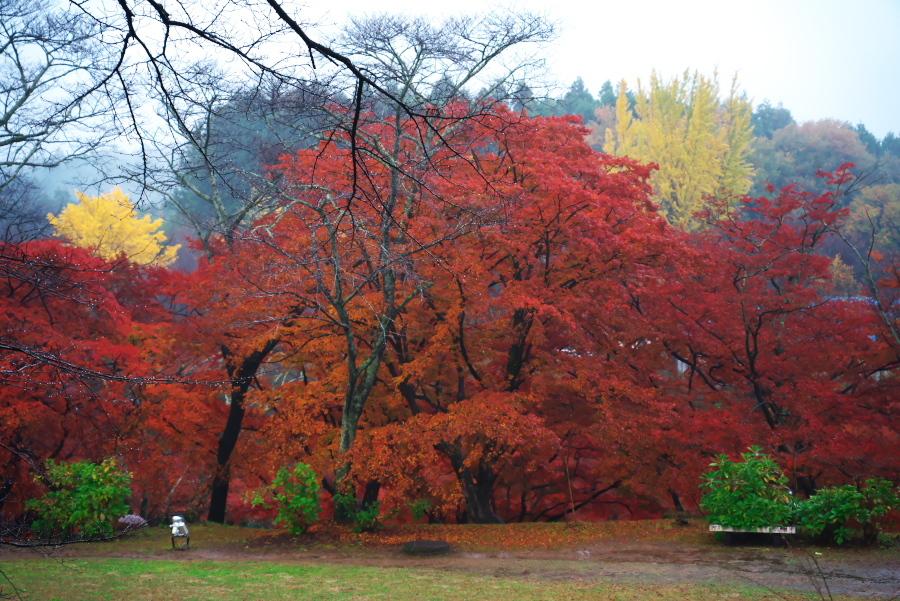 大田原市 御殿山公園の紅葉1_a0263109_19131331.jpg