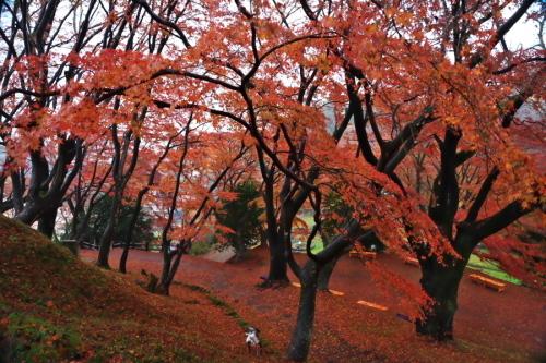 大田原市 御殿山公園の紅葉1_a0263109_19131367.jpg