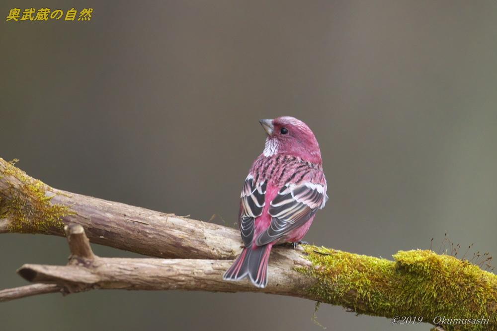 奥武蔵の赤い鳥_e0268015_21350875.jpg
