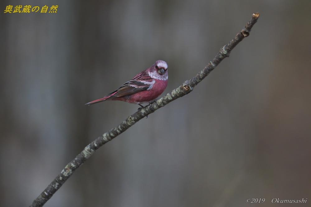 奥武蔵の赤い鳥_e0268015_21351855.jpg