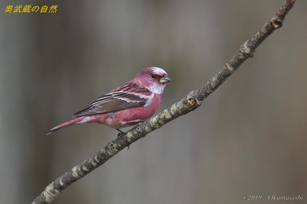 奥武蔵の赤い鳥_e0268015_21353119.jpg