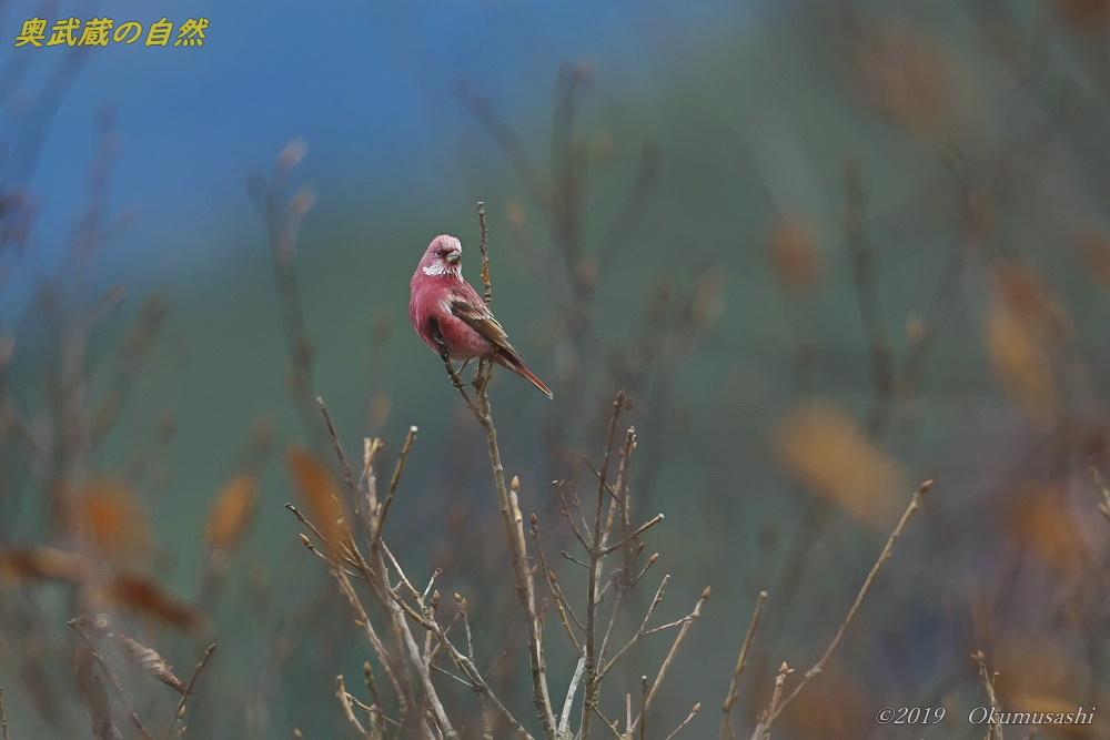 奥武蔵の赤い鳥_e0268015_21355861.jpg