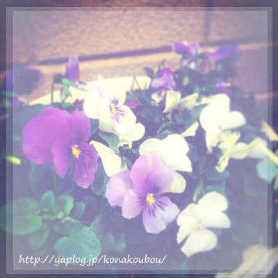 ひとあし早く、春想い_a0392423_00251810.jpg