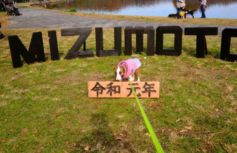 日曜日は水元公園ゆるゆるミーティング行ったよ!_b0310424_18101030.jpg