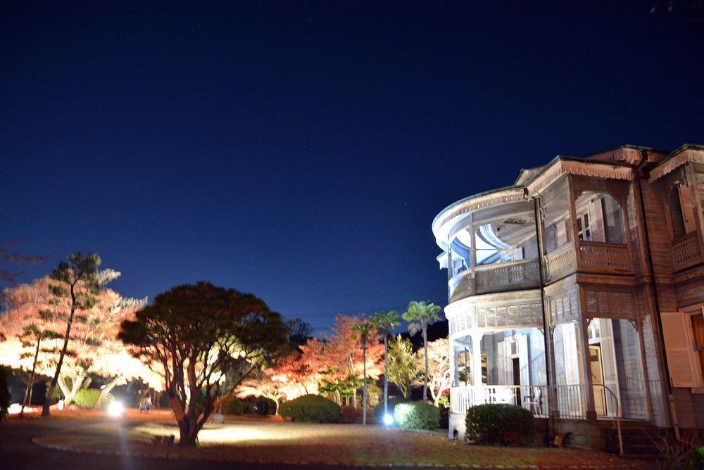 1丁目の夜間公開延長 楓の巨木_e0373930_20464533.jpg