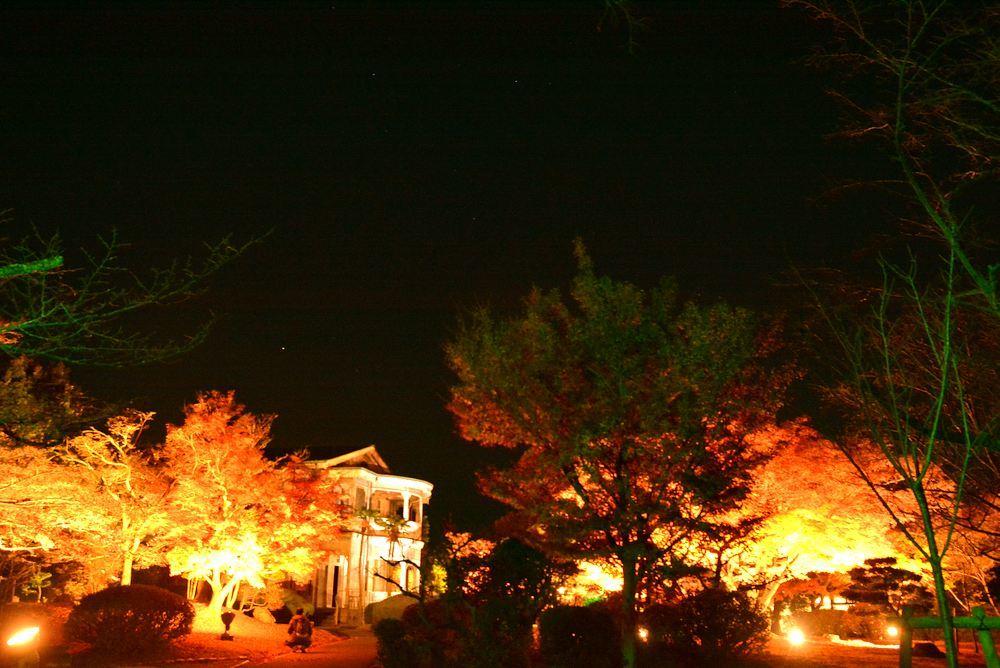 1丁目の夜間公開延長 楓の巨木_e0373930_20482750.jpg