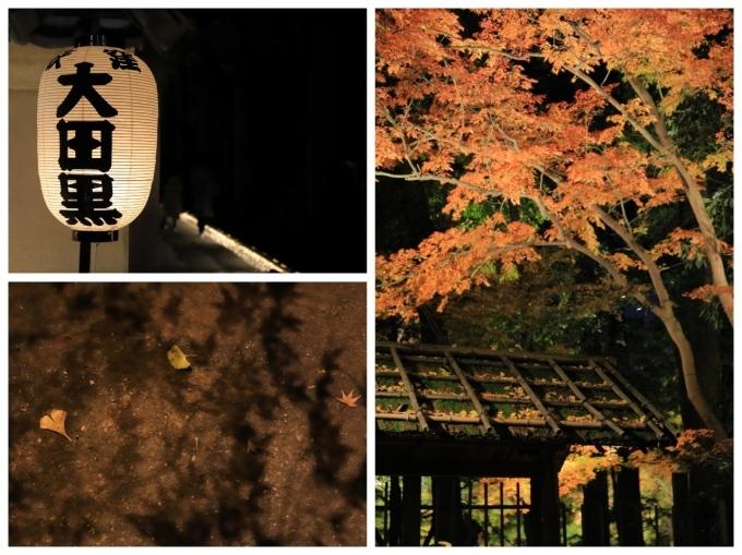 【大田黒公園】_f0348831_20003294.jpg