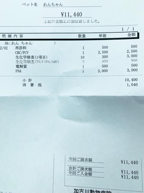 れんちゃん医療費のご報告_d0355333_12442320.jpg