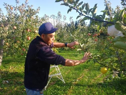 Cha@iのりんごは盛岡の山口農園さんのりんごです。_d0007735_10184382.jpg