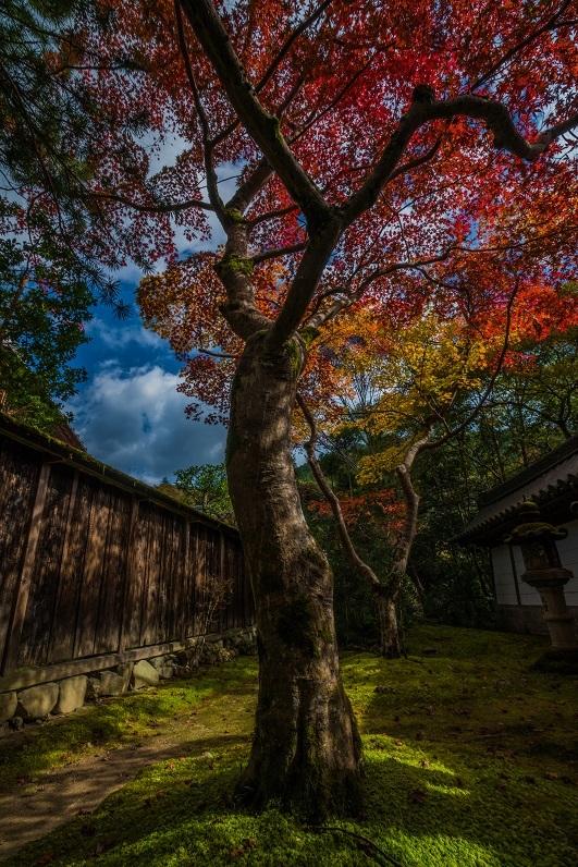 2019京都紅葉~西明寺_e0363038_10333481.jpg