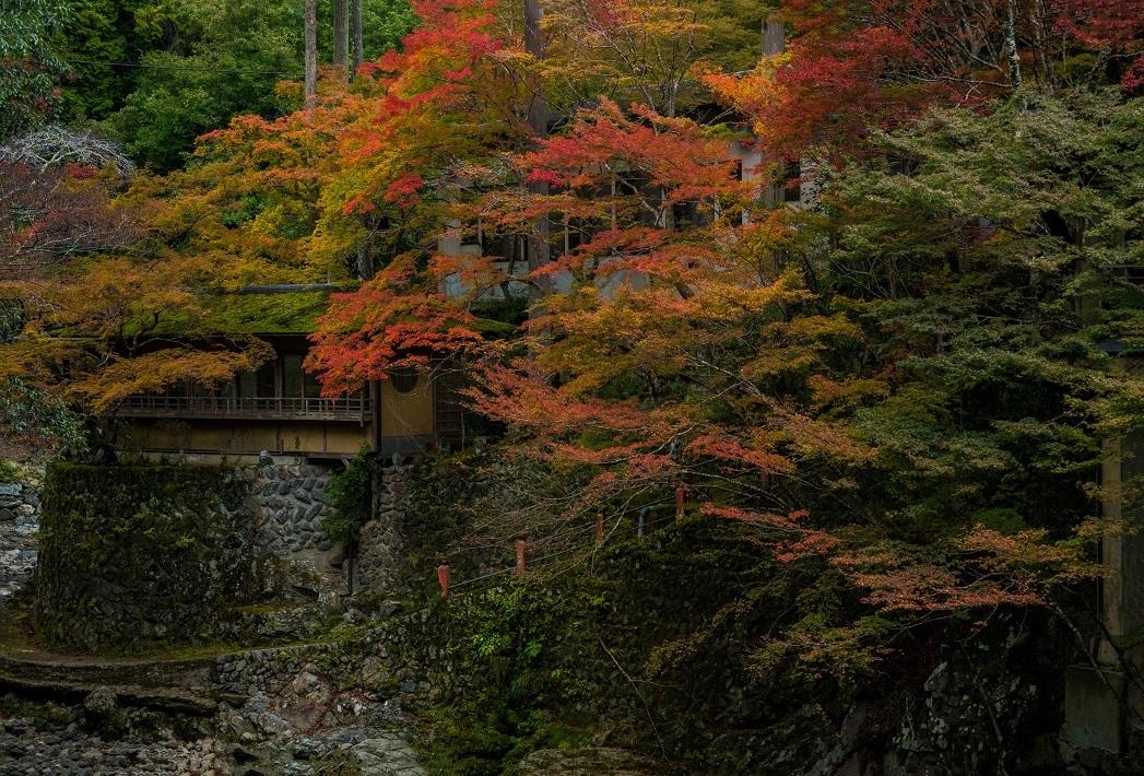 2019京都紅葉~西明寺_e0363038_10334275.jpg
