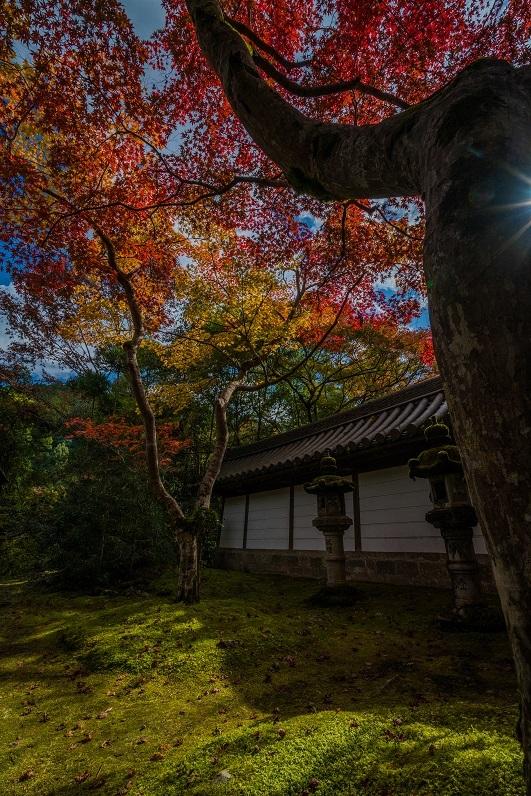 2019京都紅葉~西明寺_e0363038_10341334.jpg