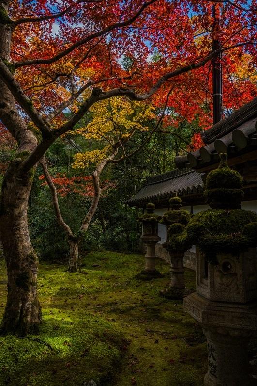 2019京都紅葉~西明寺_e0363038_10341360.jpg