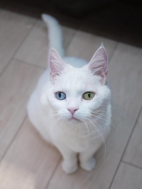 猫のお留守番 リュウちゃん編。_a0143140_23042667.jpg