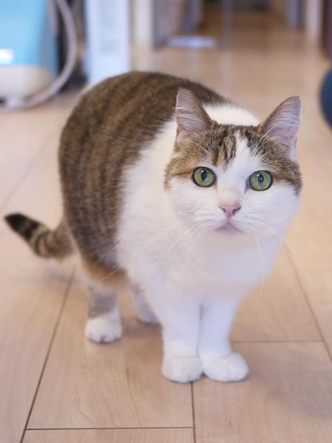 猫のお留守番 さくらちゃん編。_a0143140_23063885.jpg