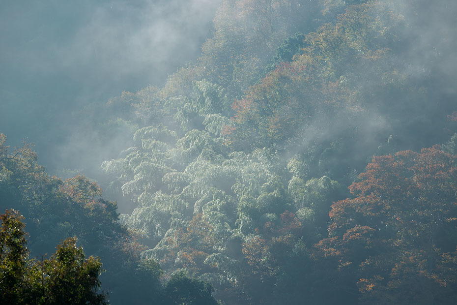 霧残る朝_c0067040_22402680.jpg
