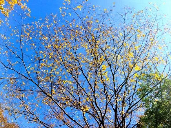 初冬_e0126350_18133650.jpg