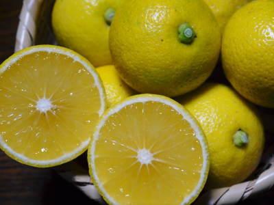 """種なしかぼす 色づいた""""ゴールド""""かぼすを大好評販売中!霜降る前に収穫を終えました!!_a0254656_16314478.jpg"""