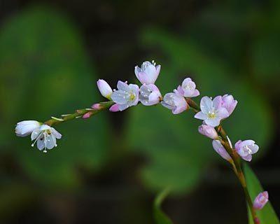 奈良盆地周遊ウォーク15 尼ヶ辻からこなべ古墳 タラの実とオシドリ_e0035757_15093937.jpg