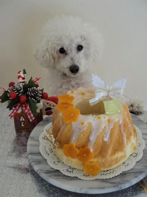 クリスマスクグロフdeだいずくんのティータイム♡_e0141159_13560029.jpg