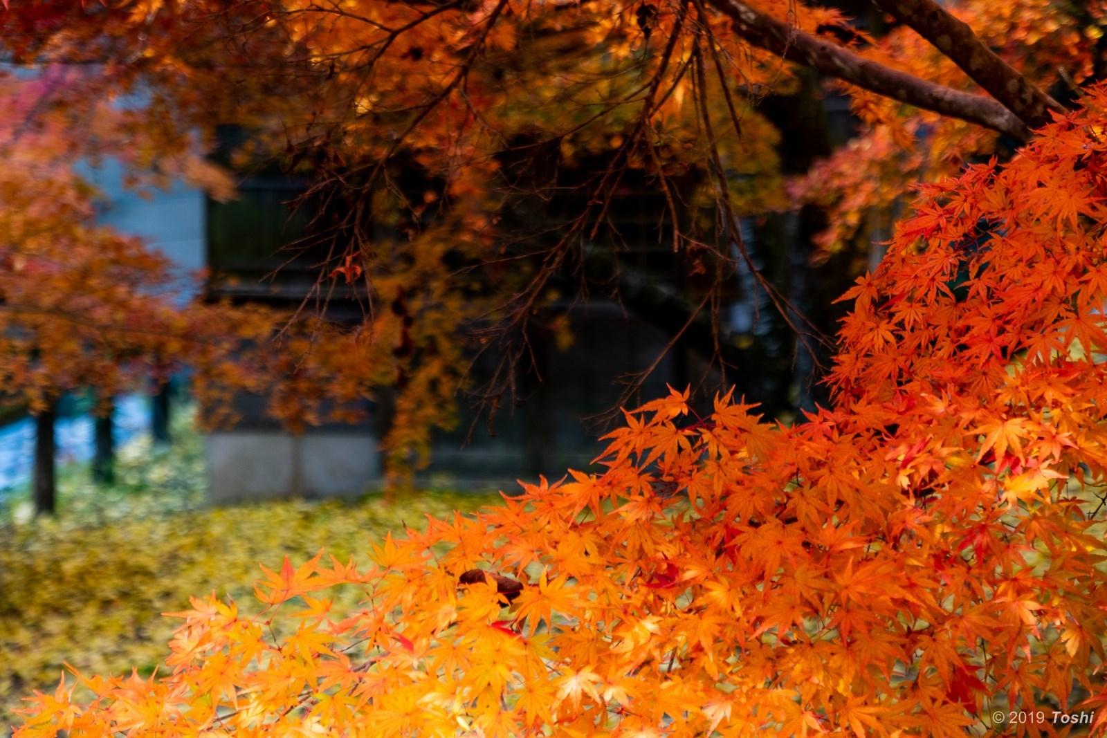 東吉野の秋_c0350572_23575535.jpg