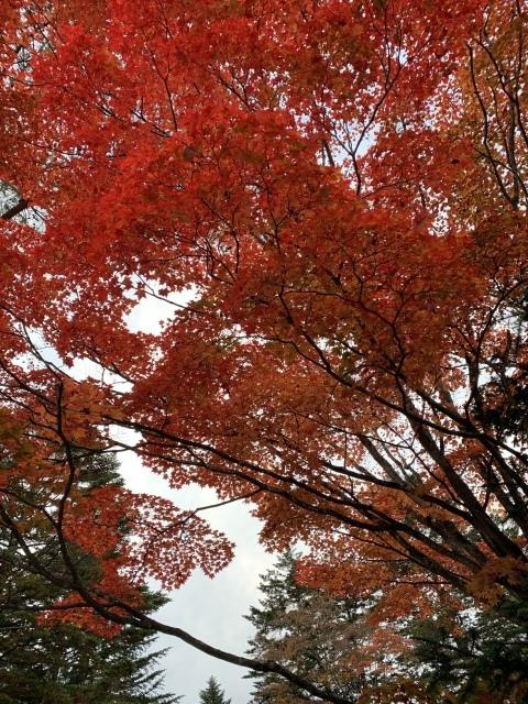 11月の旅〜①〜人生初の軽井沢へ_c0274374_07080590.jpeg