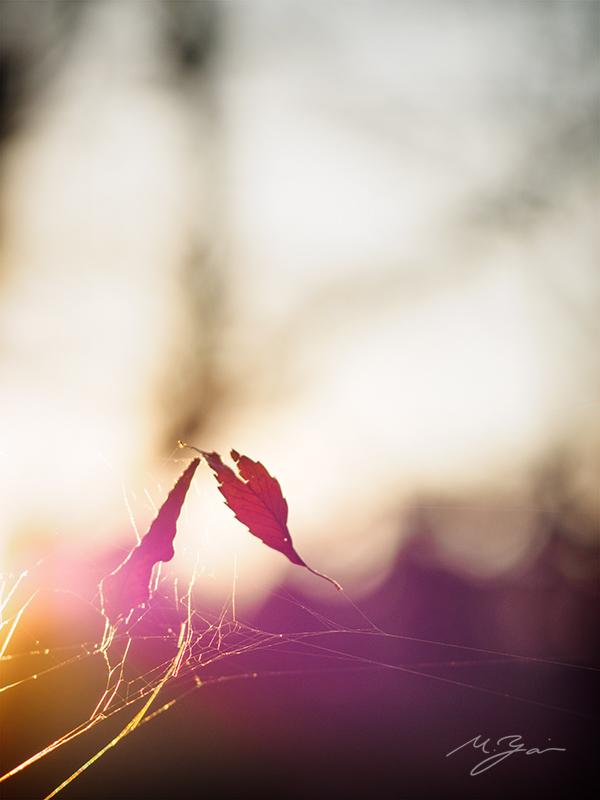 冬の太陽_a0161380_09004386.jpg
