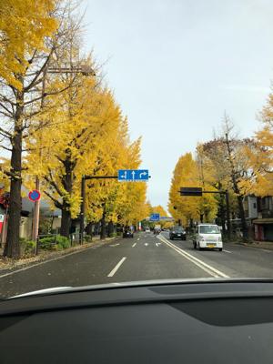 銀杏並木が綺麗でした!_f0125182_12542750.jpg