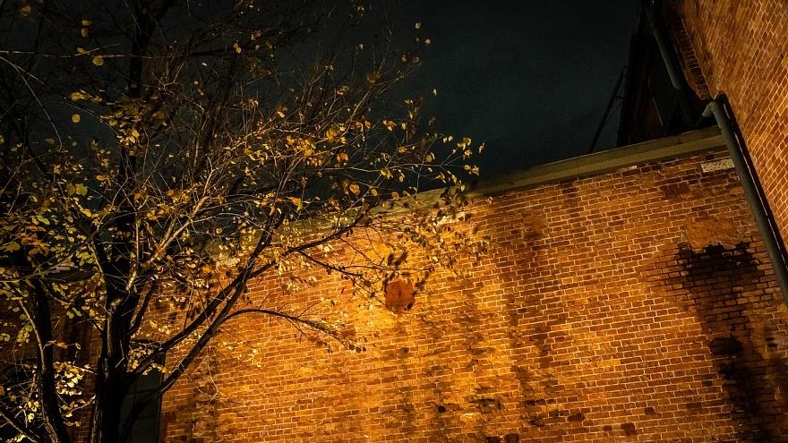 夜の赤煉瓦に棲む光蜥蜴_d0353489_22035267.jpg