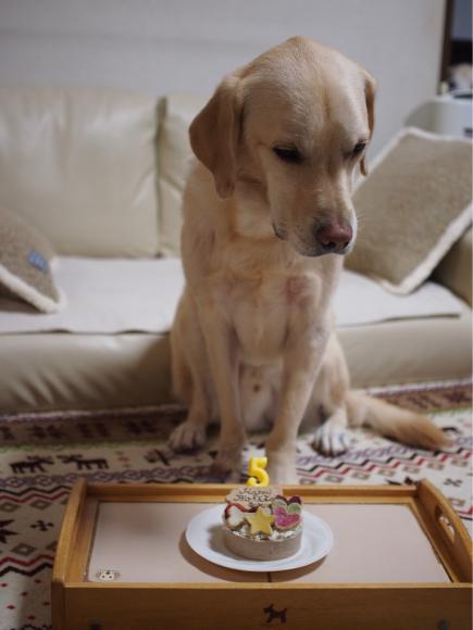 幸たん、5歳のお誕生日♡_c0028792_20182037.jpg