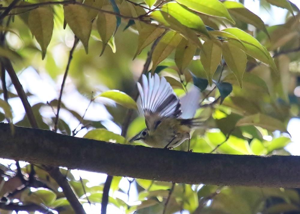 近隣公園探鳥、、_f0305401_16302500.jpg