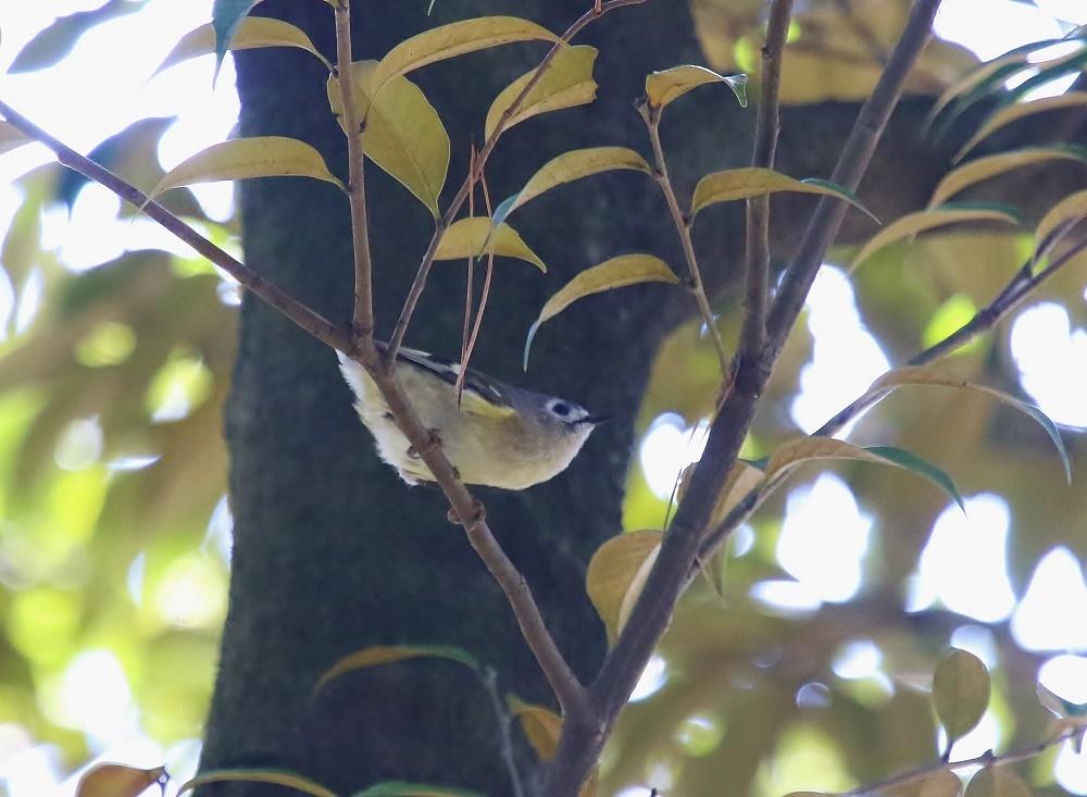 近隣公園探鳥、、_f0305401_16303100.jpg