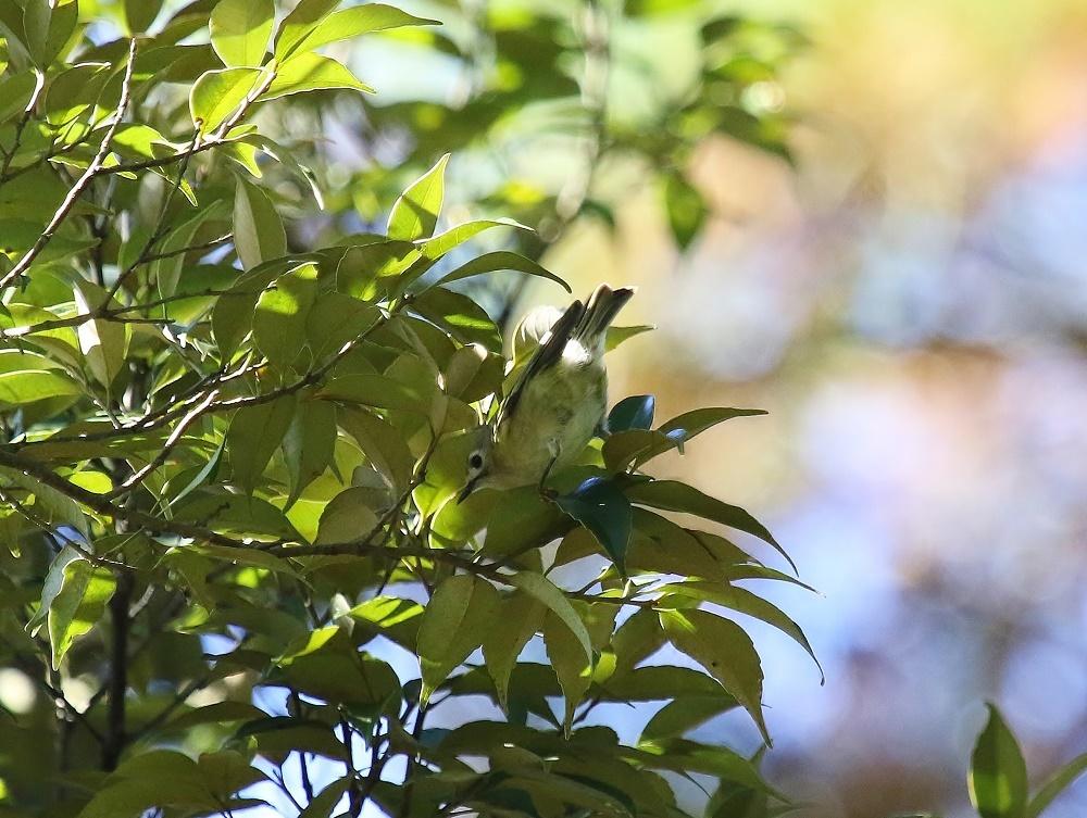 近隣公園探鳥、、_f0305401_16303797.jpg