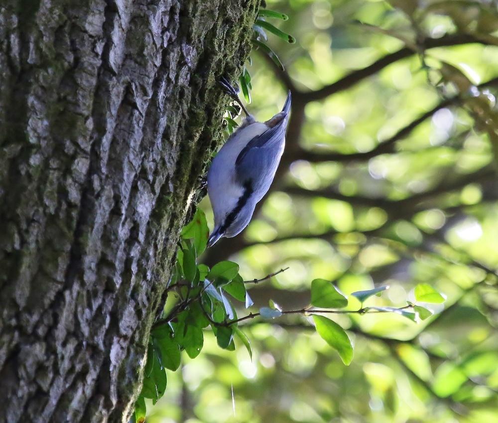 近隣公園探鳥、、_f0305401_16310286.jpg