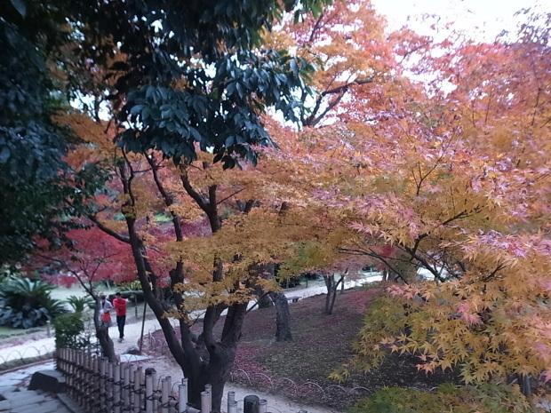 岡山後楽園2019年紅葉_f0197703_09563743.jpg