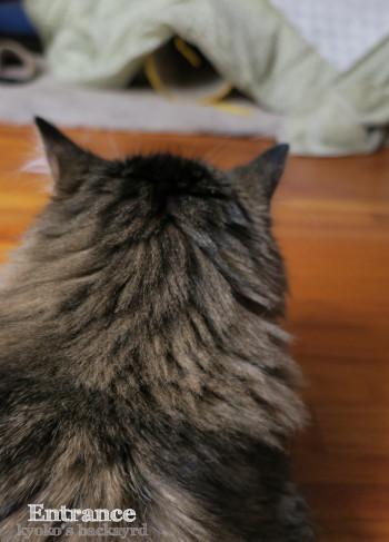 コタツの出入り口(猫ビデオ付き)_b0253205_12294999.jpg